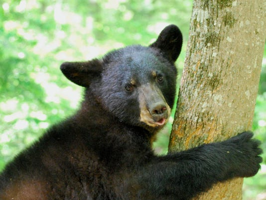 636045277140201842-bear-research-09-a.jpg