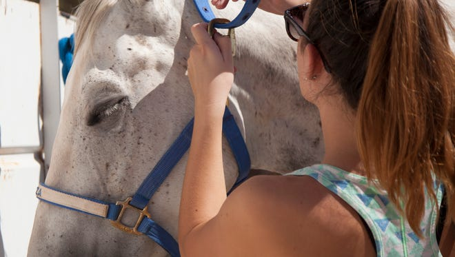 Utah's state veterinarian is advising horse owners to limit travel for their animals and to take precautions because of multiple cases of an equine virus reported in neighboring Nevada.