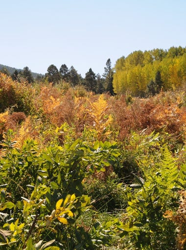 Wilson Meadow north of Flagstaff is an easy scenic hike.