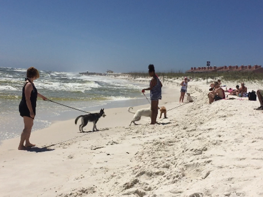 Dogs and their owners spend an afternoon at the Pensacola