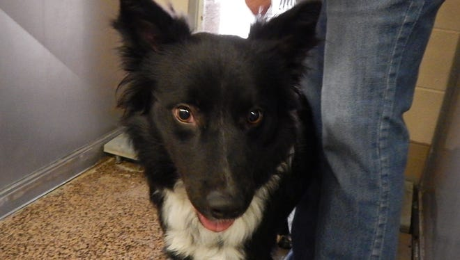 Chance is up for adoption through We Care for Animals in Mesquite, Nevada.