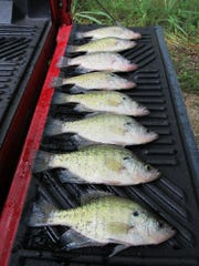 There's no doubt with the right technique, crappie can be put on the grill despite the current hot weather and high lake levels.