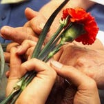 Hands holding a carnation