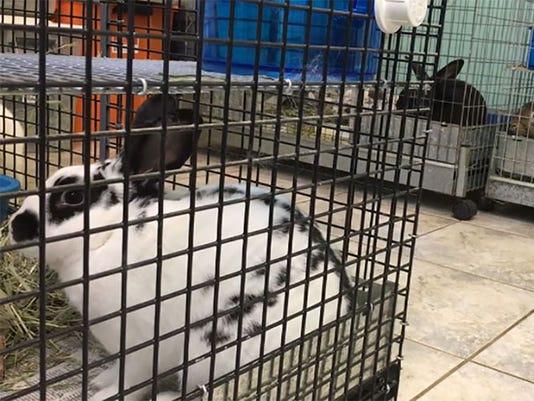 Bunnies at Humane Society