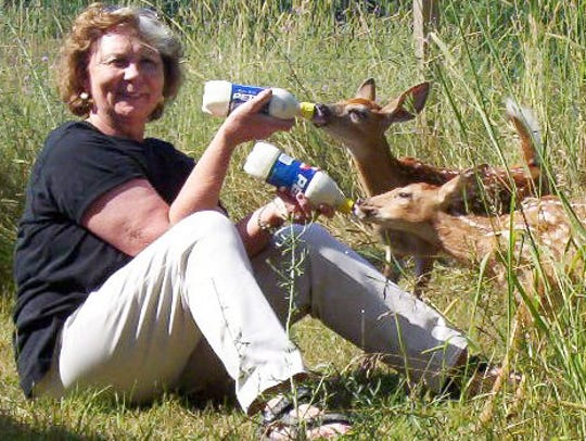 Diane Solecki was a licensed newborn deer fawn rehabilitation