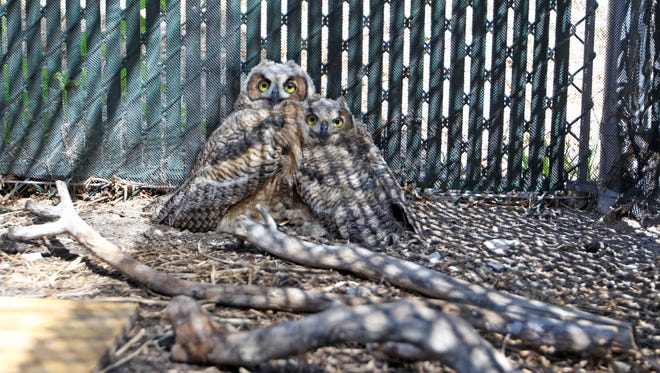 The Wildlife Rehabilitation Center can house about 50 inured, sick or young birds at a time.