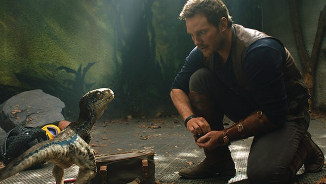 "Owen (CHRIS PRATT) with a baby Velociraptor in ""Jurassic World: Fallen Kingdom.""  When the island's dormant volcano begins roaring to life, Owen and Claire (BRYCE DALLAS HOWARD) mount a campaign to rescue the remaining dinosaurs from this extinction-level event.  Welcome to ""Jurassic World: Fallen Kingdom."""