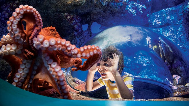 Immerse yourself in wonder at SeaWorld®