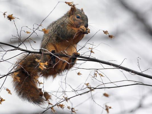 MNCO 1019 Dick Martin on peak of squirrel season.jpg