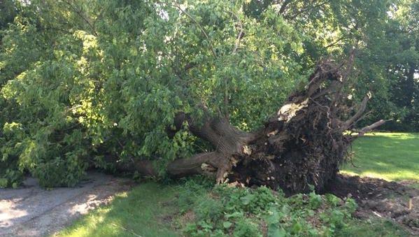 A downed tree along the  Ashwaubomay Walking Trail in Ashwaubenon on Saturday.