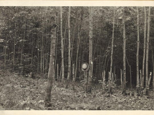 Photograph of unknown forest in Bennington County from Department of Forests & Parks, ca. 1911.