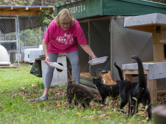 Kim Williams clean up the plates from the last meal as she starts to feed the cats in the morning.