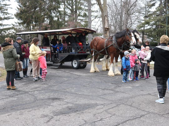 Families take photos with the South Creek Clydesdales at the Hayes Presidential Library and Museums on Saturday.