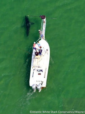 One webinar will provide an update on research looking at the shallow water movements of the Cape's white sharks.