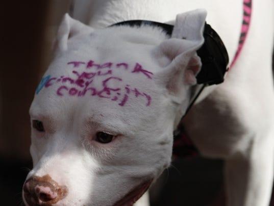 Molly S Dog Rescue