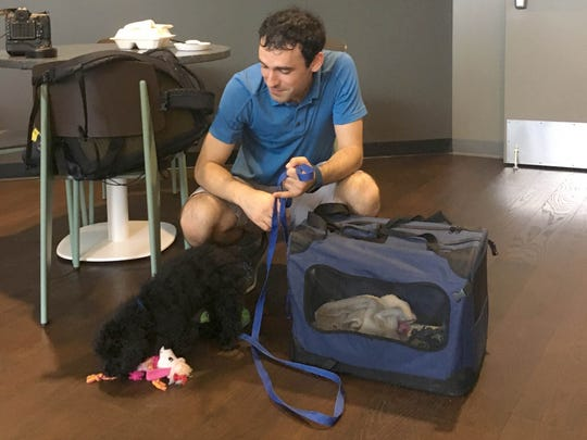 Google employee Sam Panzer is often accompanied by his young poodle, Archie, when inside Google's new Ann Arbor office.