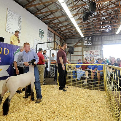 MNJ 0815 Livestock Aution 02