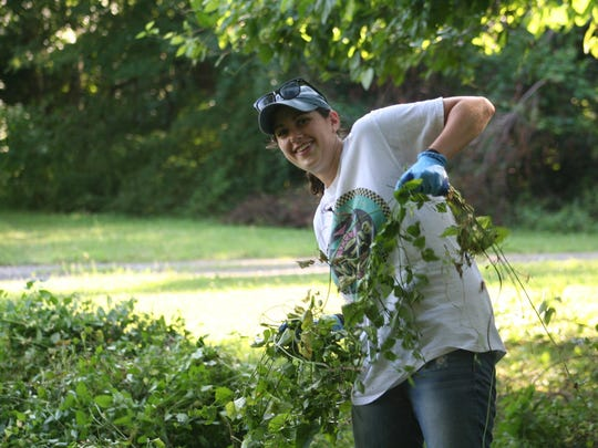 Volunteer Jordan Siskin (Wilmington resident, Tufts undergraduate, intern with the Chris Coons office) helps remove mile-a-minute weed at the Sharp Farm in Odessa, in a Delaware Wild Lands program targeting invasives. The dense foliage of this Asian can smother and kill smaller trees within one season.