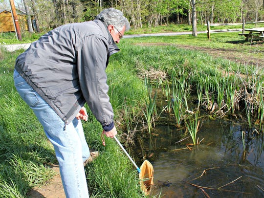 Chief Naturalist Bill Creasey has worked at the Cincinnati Nature Center since 1973. He attempts to catch a large bullfrog tadpole, but the little stinker is too fast.