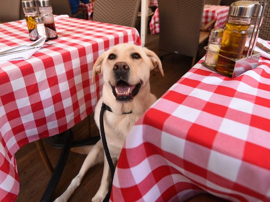 The House bill, which still needs to pass the Senate, says that restaurant owners can allow leashed dogs in the business's outdoor patio area or beer garden, regardless of any contradicting regulation.
