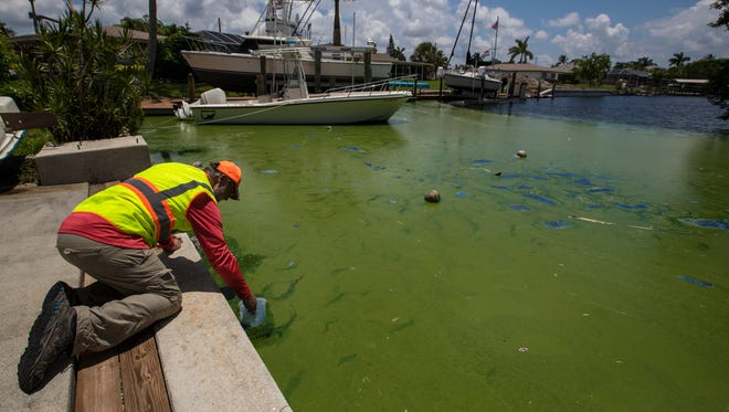 Water samples are collected for testing purposes from a canal near Lucerne Parkway and Deauville Court in Cape Coral Wednesday afternoon, 7/25/18. Algae blooms have infiltrated much of the Cape Coral canal system, creating a foul odor and a green, spray-paint tint to some of the water.