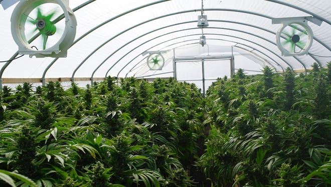 The Cannabis Control Board met for about an hour Wednesday afternoon to discuss changes to the proposed rules and regulations for the recreational cannabis industry.