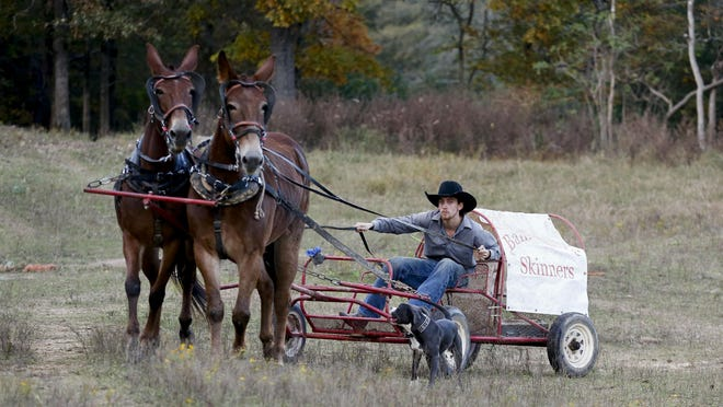 Zac Spiller races chuck wagons pulled by mules as part of the Bama Mule Skinners team.