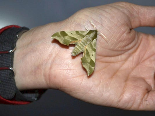 zGPG The Moth Project 6-10-15 photo 1 RESEND.jpg_20150616.jpg