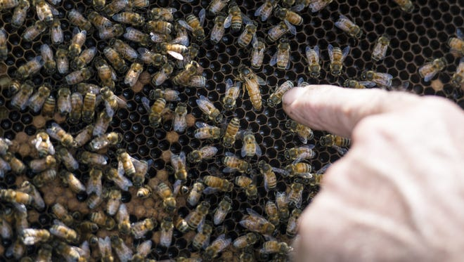 Michael Martin points to the queen bee at one group of beehives Martin has in Heidelberg Township on Thursday, August 11, 2016.