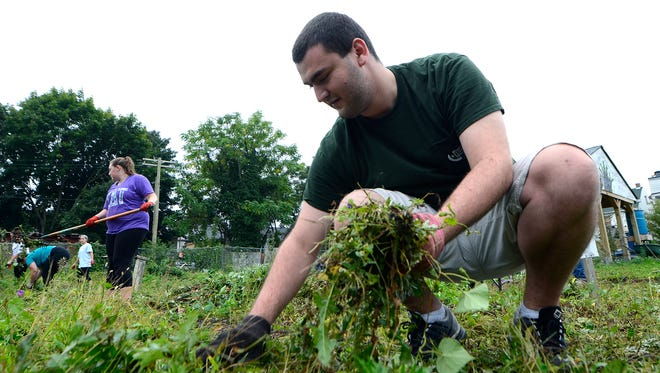 York College sophomore Zachary Snier of Fawn Grove pulls plants during the annual Spartan Service Day work at the Hope Street Garden and Learning Lab, Saturday, October 8, 2016. Students cleared all the plants from this year's garden in preparation for new gardens that will be installed later in October. John A. Pavoncello photo