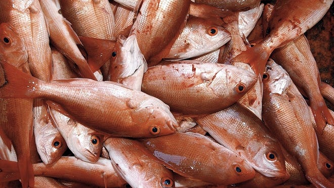 Red snapper, one of the main stocks at the center of a controversy over the accuracy of federal fish counts.