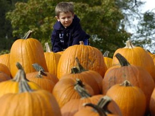 Pumpkin Fest at the Wilson Barn begins Sunday and runs through the month of October.
