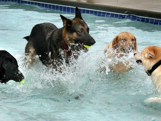 puppy plunge