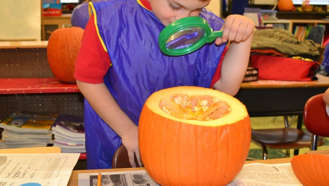 """Things got a bit messy when kindergartners at Bishop Schad Regional School in Vineland conducted a pumpkin investigation on Nov. 4. Andrew Phillips """"studies"""" the anatomy of a pumpkin."""