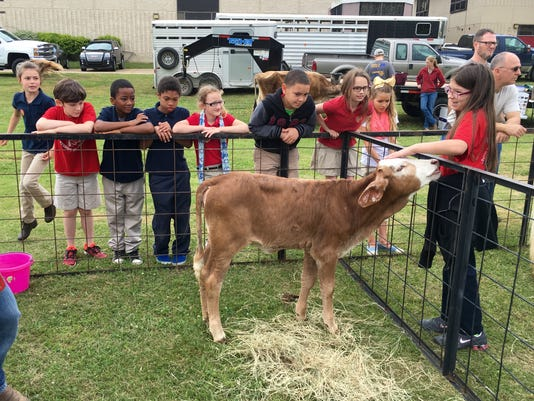 Ag-Day-petting-cow.jpg