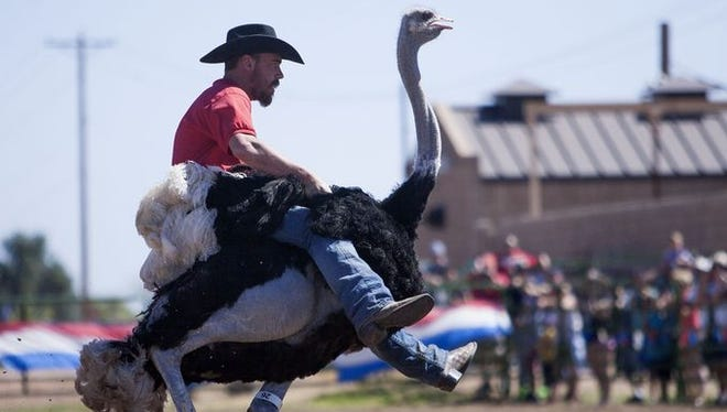 Chandler has celebrated the ostrich ranching history for the past 30 years.
