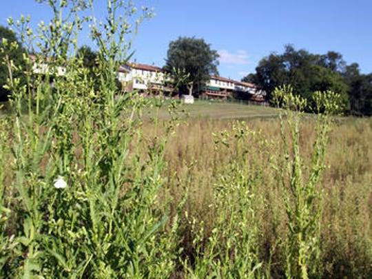 Weeds grow on the derelict Three Little Bakers Golf Club on Sept. 6.