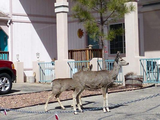 deer-are-not-statues.JPG