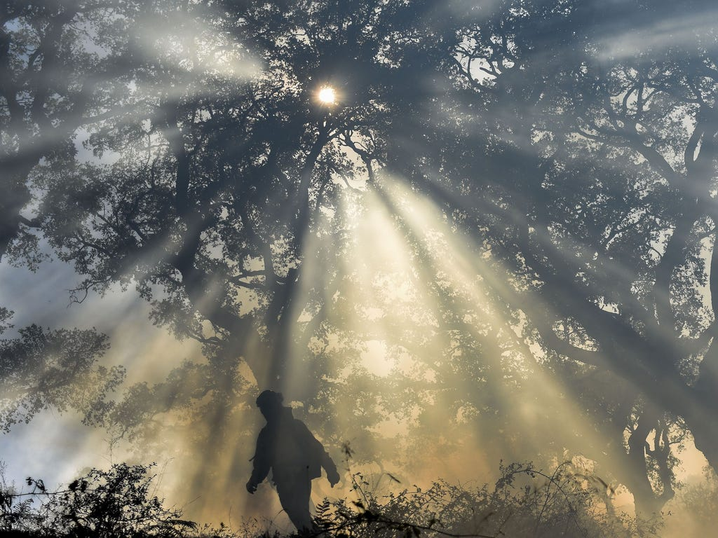 A firefighter  walks through the smoke during a forest fire in Los Barrios, near Cadiz, Spain.