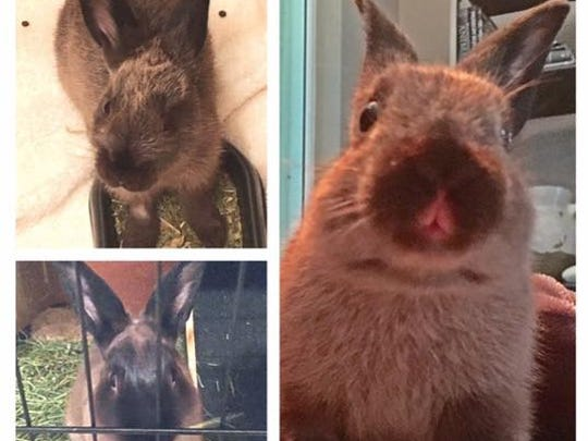 This bunny went missing from 1st Avenue NW, west of
