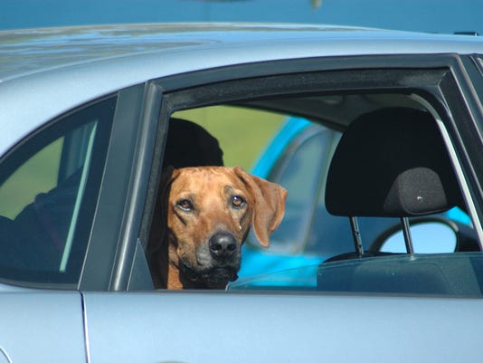 Talking dogs: Take your dog to mundane destinations to teach him to be a calm car traveler