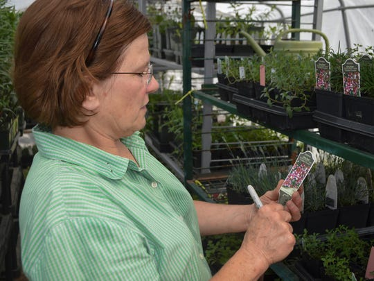 Debbie Jacobs, a member of the Master Gardners Plant Sale committee, prices plants as she readies for the upcoming sale. The Master Gardners start all of the plants that are for sale during the annual fundraising event from seed in a number of greenhouses around the area.