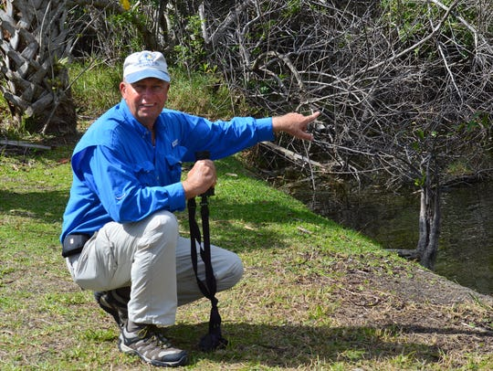 Naturalist Bob McConville points out an alligator during