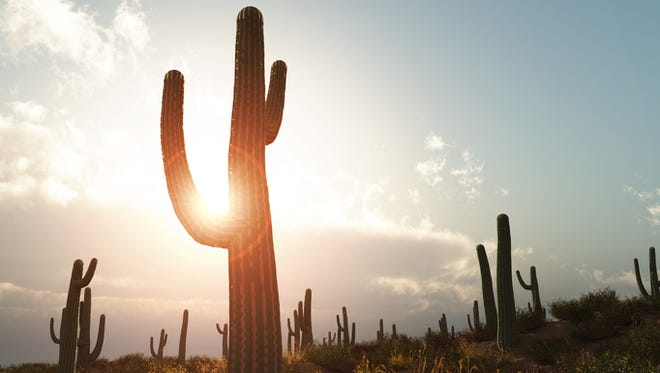 Arizona is no stranger to heat, but there can be such a thing as excessive heat.