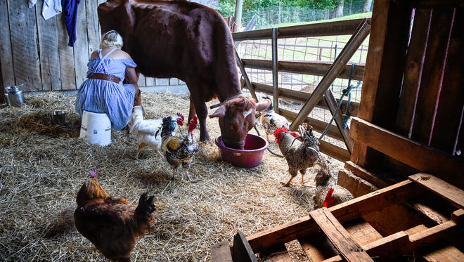 Samantha Lamb milks her cow as the chickens run free at the Farm and the Fiddle in Santa Fe, Tenn., Thursday, May 25, 2017.