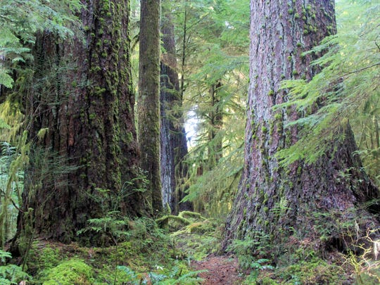 Best Central Coast Range hikes. Honorable mention — Valley of the Giants.