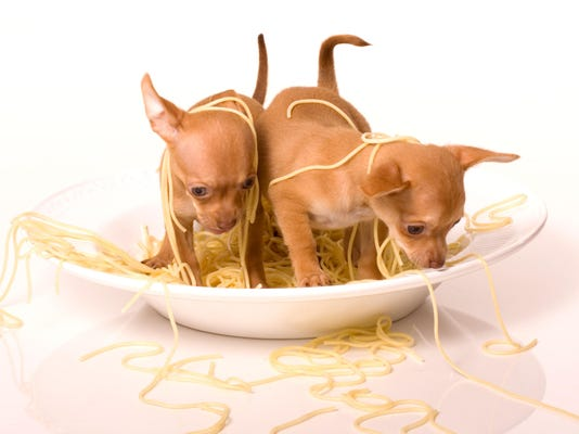 Two Puppies in Spaghetti Bowl 8