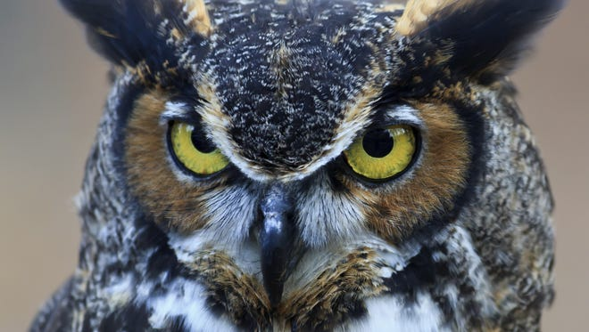 A 58-year-old Oregon jogger was struck in the back of the head by an owl.