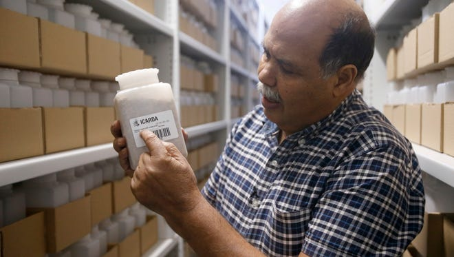Ahmed Amri, head of ICARDA's Genetic Resources Unit, displays seed samples in the Rabat seed bank, Morocco,