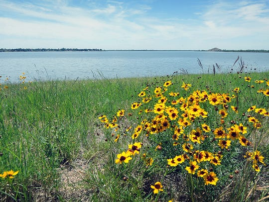 Wildflowers bloom on the banks of Lake Wichita. Following